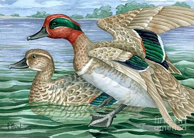 Wetland Painting - Green Winged Teal by Paul Brent