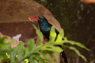 Photograph - Green Wood Hoopoe 2 by Chris Flees