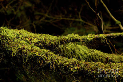 Photograph - Green Wood by Ivete Basso Photography