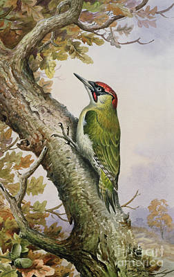 Woodpecker Painting - Green Woodpecker by Carl Donner