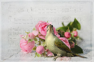 Animales Photograph - Green Woodpecker Stilllife by Heike Hultsch
