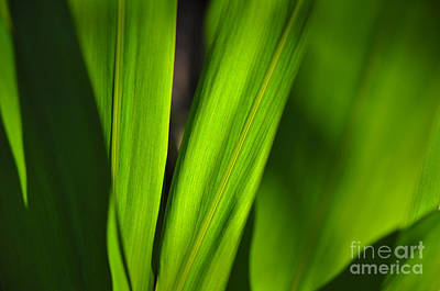 Outdoor Photograph - Green World by Angelo DeVal