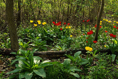 Green Yellow And Red - Tulip Forest Impressions  Art Print
