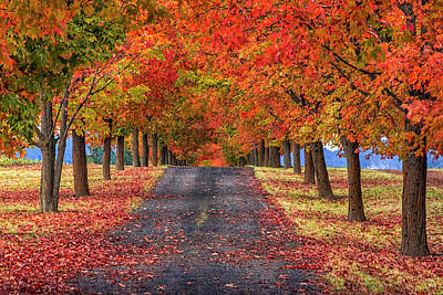 Washington State Photograph - Greenbluff Autumn by Mark Kiver