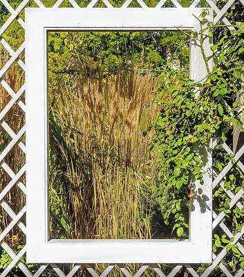 Photograph - Greener Analysis by Robin Zygelman