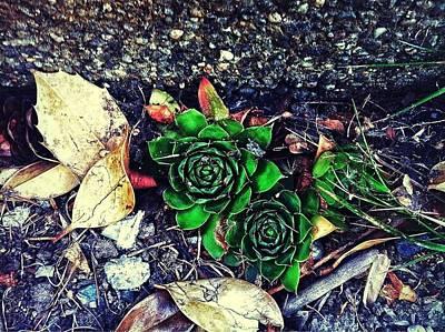 Photograph - Greener In Between by Eddie G