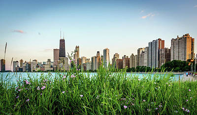 Chicago Skyline Photograph - Greenery In Chicago by Med Studio