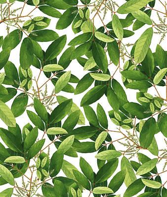 Digital Art - Greenery by Uma Gokhale