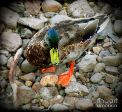 Photograph - Greenhead by Colleen Kammerer