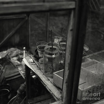 Photograph - Greenhouse by Clayton Bastiani
