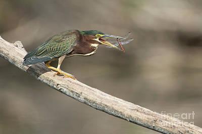 Photograph - Greenie With Dragonfly by Bryan Keil