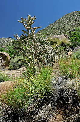 Photograph - Greening Of The High Desert by Ron Cline