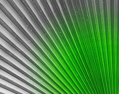 Greenish Palm Art Print by Gigi Kobel
