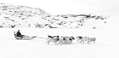 Huskies Photograph - On The Trail To Home by Janet Burdon