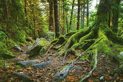 Photograph - Greenleaf Trail by Robert Clifford