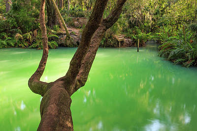 Florida Landscape Photograph - Greens Springs by Stefan Mazzola