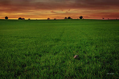 Photograph - Greenscape by Tim Bryan