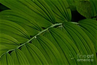 Photograph - Greensleeves by Tim Good