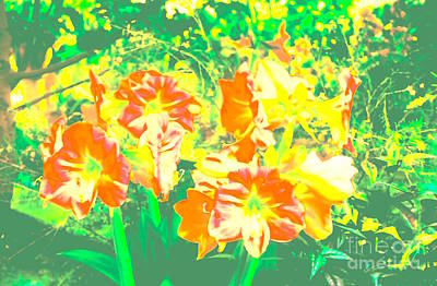Abstract Royalty-Free and Rights-Managed Images - greenSURROUNDSamaryllis by Kasha Baxter