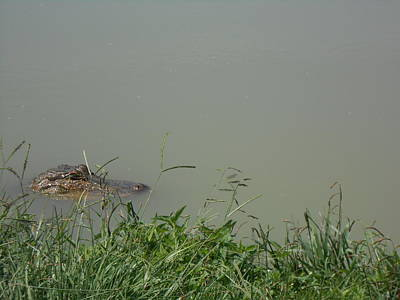 Photograph - Greenwood Gator Farm by Cynthia Powell