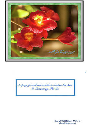 Digital Art - Greeting Card 01 by Gene Norris