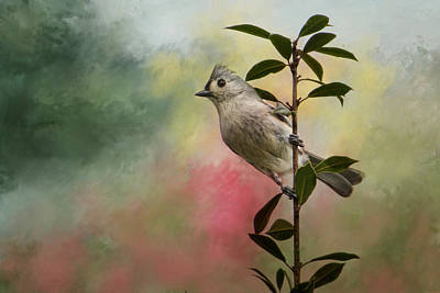 Tufted Titmouse Photograph - Greeting Spring by Jai Johnson