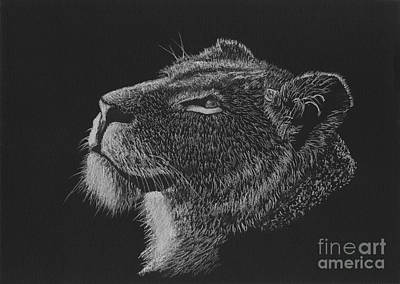 Drawing - Greeting The Morning Sun - Black And White Lioness Drawing by Tracey Everington