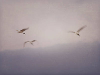 Photograph - Gret White Egret Ghost by Charles McKelroy