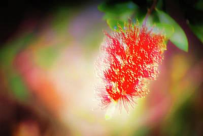 Photograph - Grevillea Dream by Brett Christensen