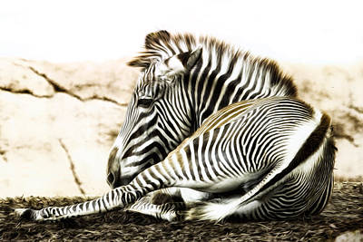 Lay Digital Art - Grevy's Zebra by Bill Tiepelman