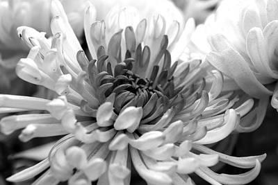 Photograph - Grey Blossom by Sumit Mehndiratta