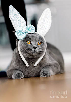 Photograph - Grey Cat With Cute Bunny-like Headband by Michal Bednarek