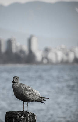 Photograph - Grey City Bird by Perggals - Stacey Turner