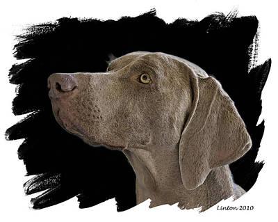 Akc Digital Art - Grey Ghost by Larry Linton