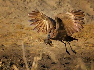 Photograph - Grey Go-away-bird  by Myer Bornstein