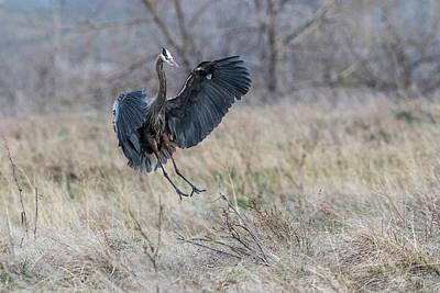 Photograph - Grey Heron #8 by Catherine Lau