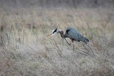 Photograph - Grey Heron #9 by Catherine Lau