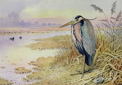 Heron Painting - Grey Heron by John James Audubon