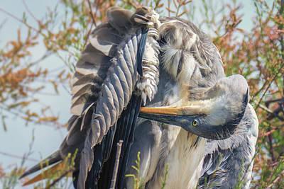 Photograph - Grey Heron, Parc De Camargue, France by Jivko Nakev