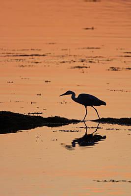 Photograph - Grey Heron Sunset by Peter Walkden