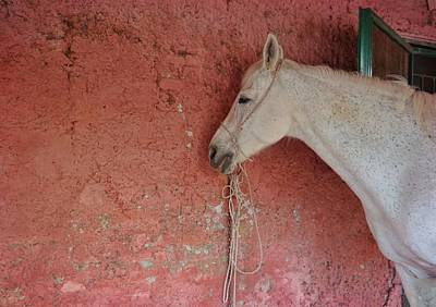 Photograph - Grey Mare by JAMART Photography
