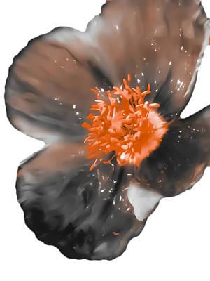 Orange Poppy Photograph - Grey Orange Poppy 2 by Heather Joyce Morrill
