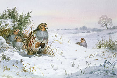 Grey Partridge Art Print