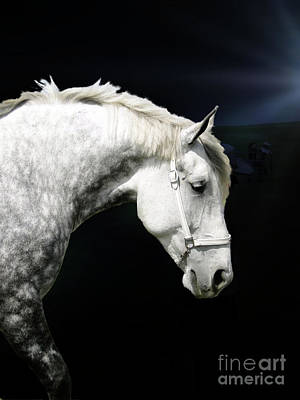Photograph - Grey Percheron Beauty II by Al Bourassa