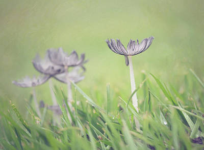 Photograph - Grey Petals by Sue Collura