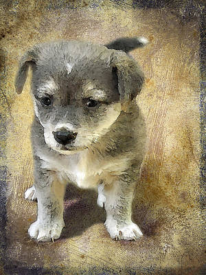 Watercolor Pet Portraits Photograph - Grey Puppy by Svetlana Sewell