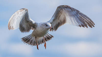 Photograph - Grey Seagull Wings by Jeff at JSJ Photography