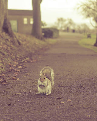 Photograph - Grey Squirrel In Autumn Park A1 by Jacek Wojnarowski
