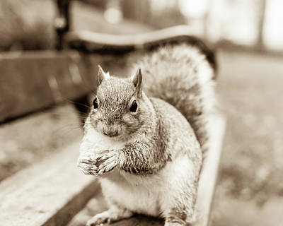 Photograph - Grey Squirrel In Autumn Park G by Jacek Wojnarowski