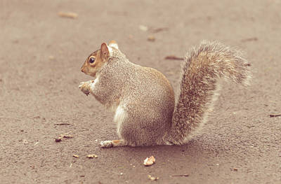 Photograph - Grey Squirrel In Autumn Park J by Jacek Wojnarowski